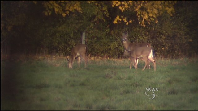 NH biologist: Don't feed the deer