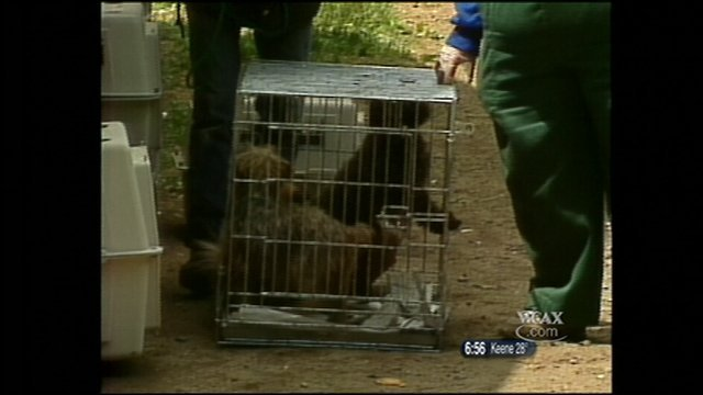 Over 180 animals removed from an East Topsham home in a 1991 animal cruelty case.