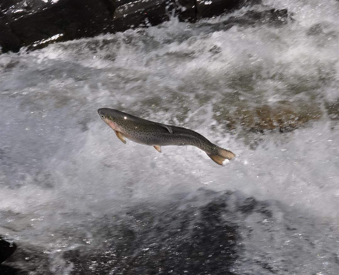 Courtesy: Vt. Fish & Wildlife-Tom Rogers