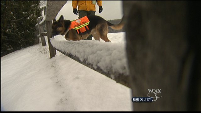 Abel searches the entire area, including places his handler can't reach.