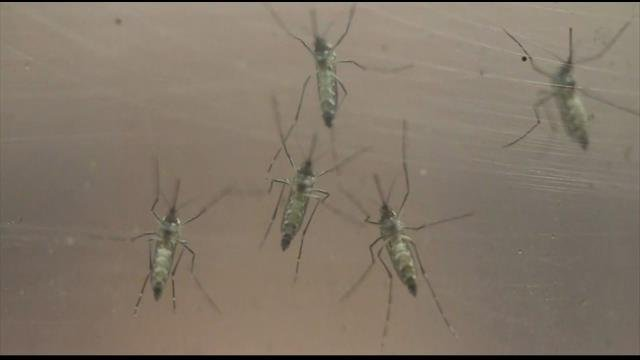 Pierce County man contracts West Nile virus