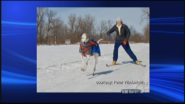 Hanks and Gunner skijoring. Photo by Peter Wadsworth.