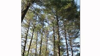 Courtesy: Barbara Burns/Vt. Dept. of Forests, Parks & Recreation