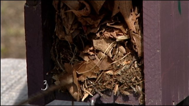 Limpieza y colocación Nest Boxes - G. J. Gamble